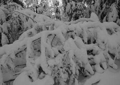 Wandern Schneeschuhe Bayerischer Wald Mauth Finsterau