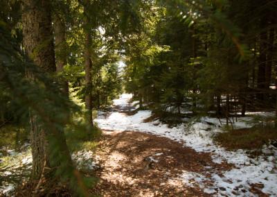 Wanderweg Riedlhütte Bienstand Bayerischer Wald