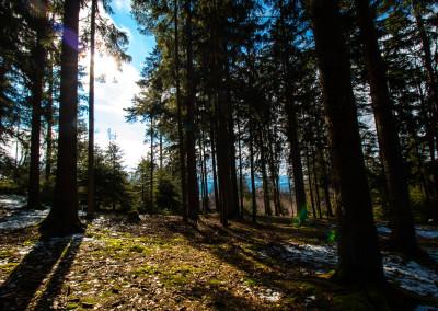 Wandern Naturpark Bayerischer Wald