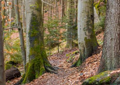 Wanderweg Spiegelau Bayerischer Wald