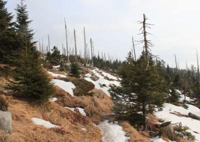 Wandern Dreisessel Bayerischer Wald