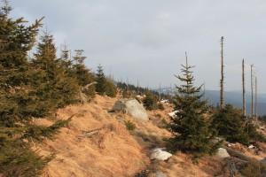 Dreisessel Wandern Bayerischer Wald