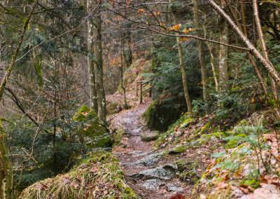 Wandern in der Buchberger Leite