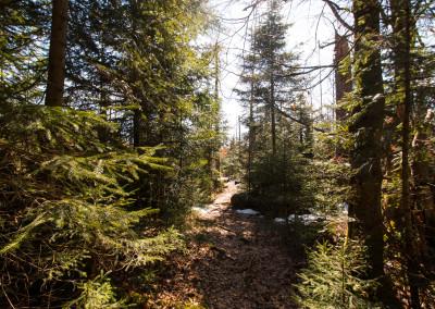 Wandern im Klosterfilz Nationalpark Bayerischer Wald