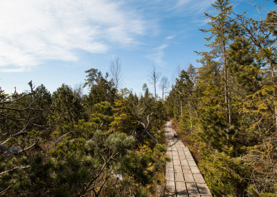 Wandern Bayerischer Wald Klosterfilz