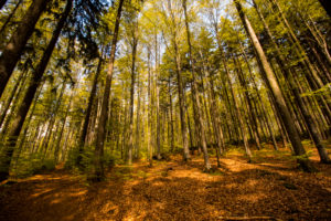 Wandern Falkenstein Nationalpark Bayerischer Wald