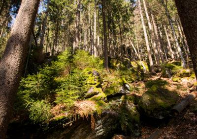 Wandern Bayerischer Wald Falkenstein Nationalpark