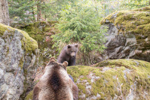 Bärenbaby Bayerischer Wald