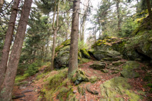 Kaitersberg Wanderung Bayerischer Wald