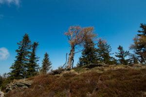 Bayerischer Wald Wandern Kaitersberg