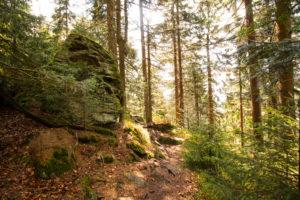 Wandern Kaitersberg Bayerischer Wald