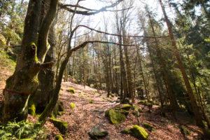 Kaitersberg Wandern Bayerischer Wald