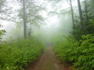 Waldwildnis Bayerischer Wald Lusen Nationalpark