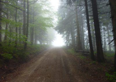 Lusen Bayerischer Wald Wandern Nationalpark