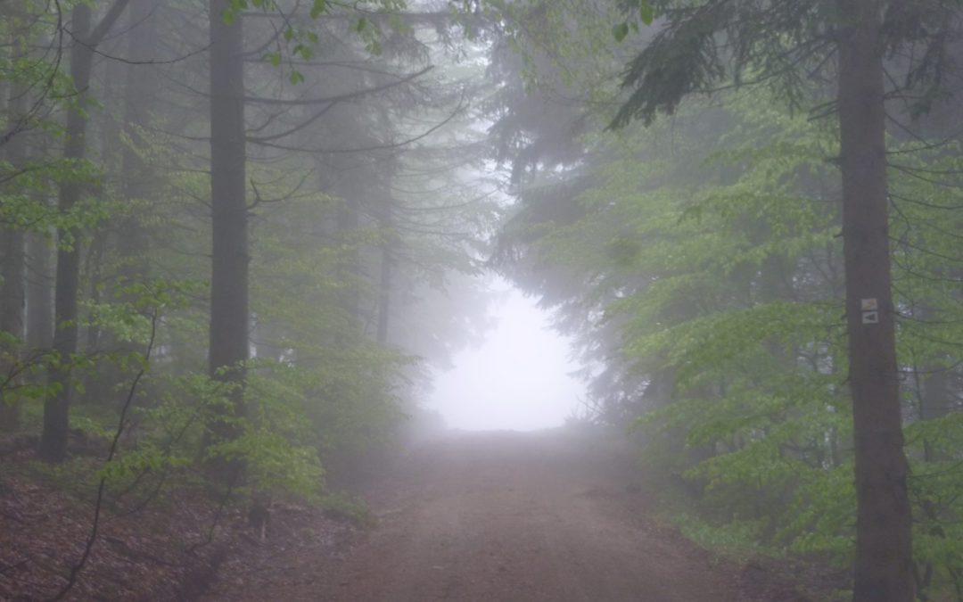 Lusenwanderung im dichten Nebel