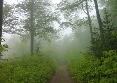 Lusenwanderung Nationalpark Bayerischer Wald