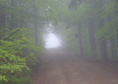 Wandern Lusen Bayerischer Wald