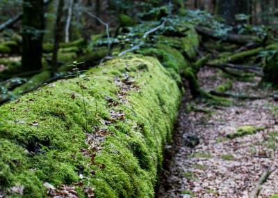 Waldwildnis Nationalpark Bayerischer Wald