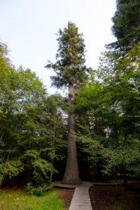 Hans Watzlik Nationalpark Bayerischer Wald