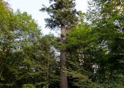 Hans Watzlik Hain Nationalpark Bayerischer Wald