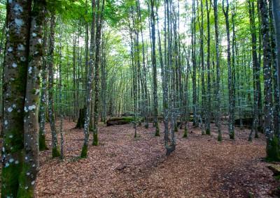 Waldwildnis Hans Watzlik Hain Urwaldsteig Bayerischer Wald