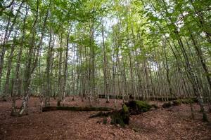 Wandern Urwaldsteig Nationalpark Bayerischer Wald