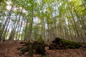 Urwaldsteig Bayerischer Wald