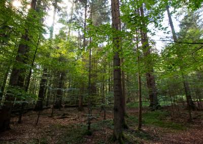 Waldwildnis Bayerischer Wald