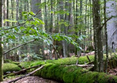 Hans Watzlik Hain Bayerischer Wald