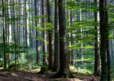 Wandern Hans Watzlik Hain Bayerischer Wald