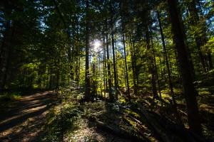 Wanderweg zum Lusen Nationalpark Bayerischer Wald