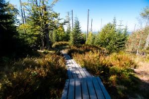 Bayerischer Wald Wandern Lusen