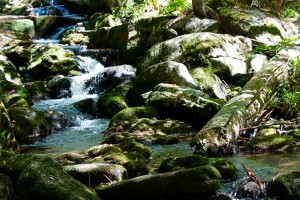 Kleine Ohe Waldhäuser Bayerischer Wald