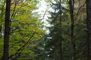 Bärenpfad Bayerischer Wald Altschönau