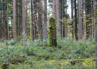 Bärenpfad Bayerischer Wald
