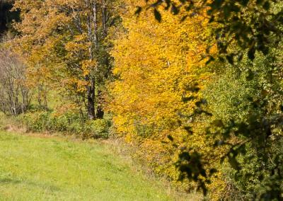 Herbst Bayerwald