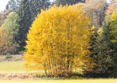 Bayerischer Wald Herbst Wandern