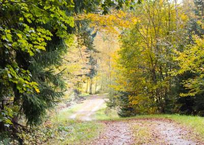 Wandern Herbst Bayerischer Wald