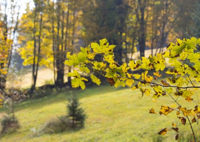 Bayerwald Herbst