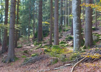 Herbstwald Bayerischer Wald