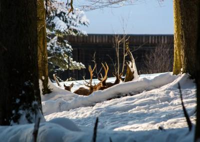 Tierfreigelände im Winter Bayerischer Wald