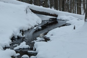 Winter Tierfreigelände Bayerischer Wald