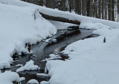 Winter im Tierfreigelände Bayerischer Wald