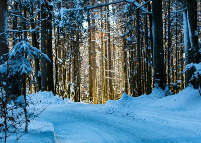 Tierfreigelände Nationalpark Bayerischer Wald im Winter