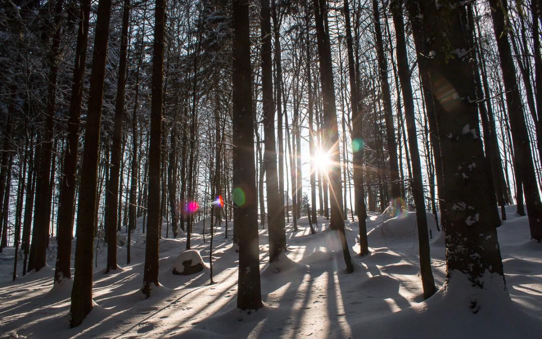 Winterliche Impressionen aus dem Bayerischen Wald