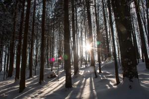 Bayerischer Wald Winterwald