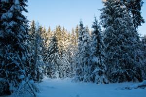 Winterlandschaft Bayerischer Wald