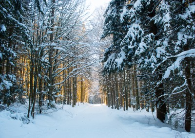 Winterwandern Bayerischer Wald