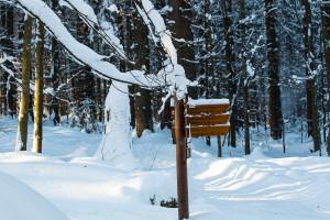 Winterwandern Nationalpark Bayerischer Wald