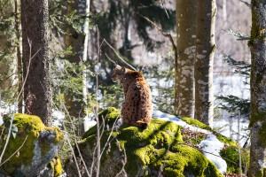 Luchs Nationalparkzentrum Lusen Bayerischer Wald